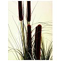 Europalms Reed grass with cattail, dark-green,152cm , Sztuczna trawa 3/3