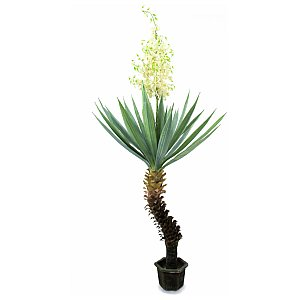 Europalms Yucca palm with blossoms, 222cm Sztuczna palma 1/4
